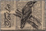 Franki Kohler, Toile Downy Woodpecker