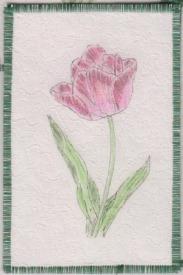 Lynn Chinnis, 12 tulip