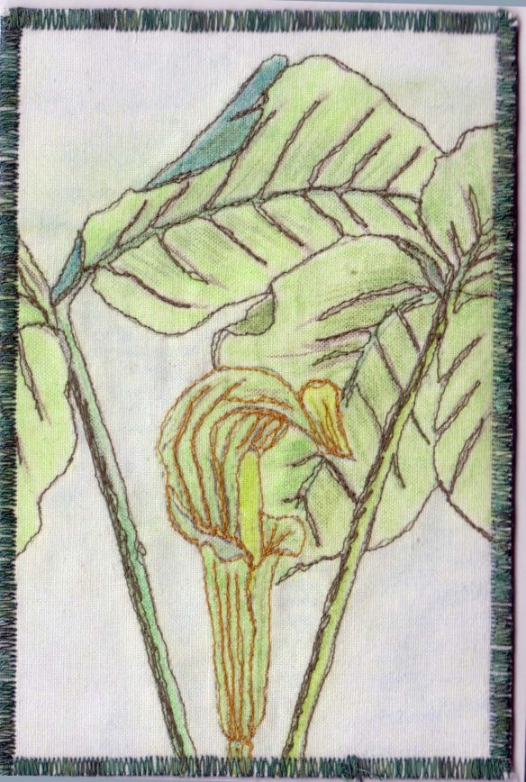 Chinnis, Jack in the pulpit
